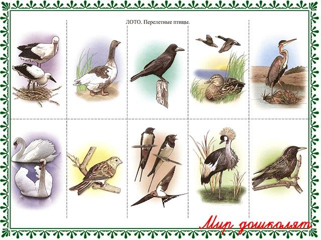 знакомство дошкольников с перелетными птицами