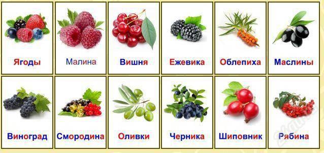 Картинки по запросу ягоды картинки для детей